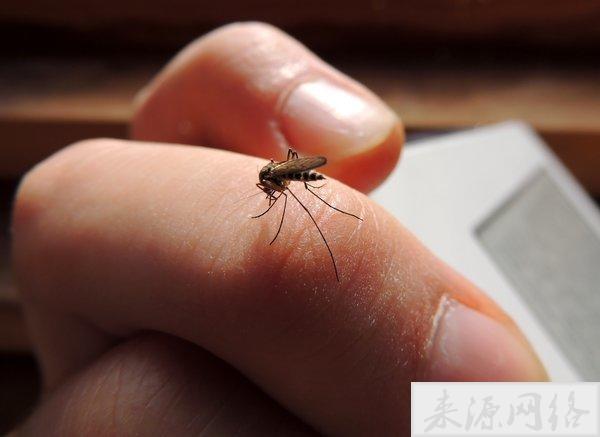 蚊子喜欢这7类人,很多人都中招